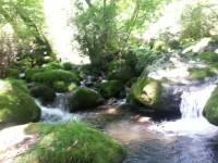 清流の森2
