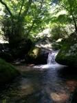 清流の森3