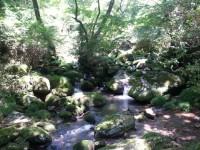 清流の森5