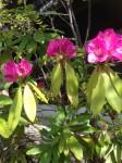 和らく花④